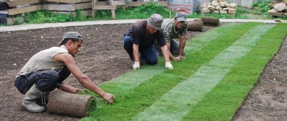 Рулонный газон как укладывать самостоятельно