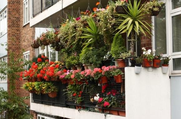 Идеи расположения цветов на балконе фото
