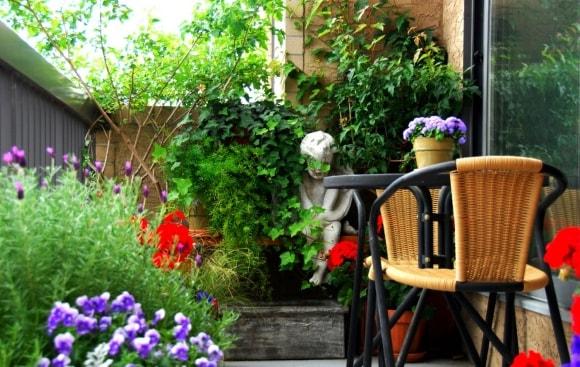 Идеи расположения растений на балконе фото